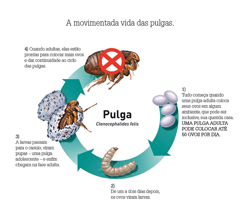 Juntos contra as pulgas